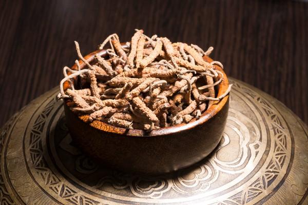 Cordyceps-Yartsa-Gunbu-Blog
