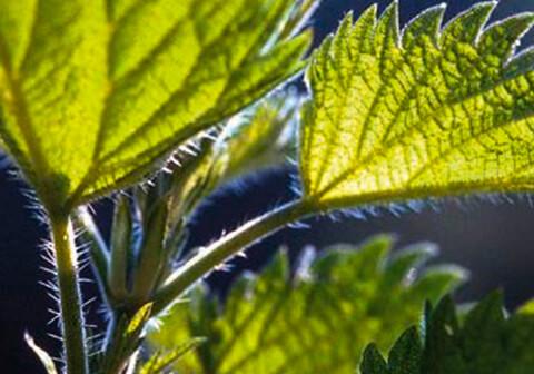 Heilpflanzen & Naturerfahrung